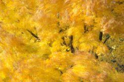 Blowing Leaves 12
