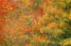 Blowing Leaves 13