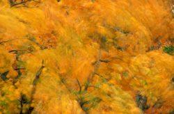 Blowing Leaves 14