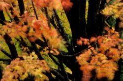 Blowing Leaves 15
