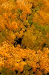 Blowing Leaves 16