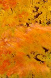 Blowing Leaves 3
