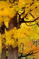 Blowing Leaves 4
