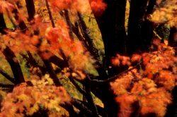 Blowing Leaves 5