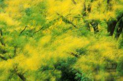 Blowing Leaves 7
