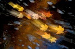 Blowing Leaves 9
